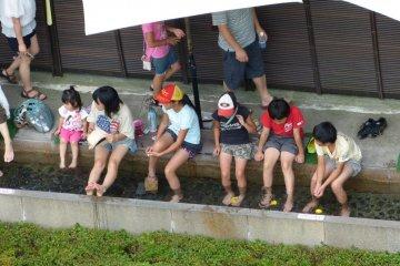 大家排排坐,来洗脚喽!