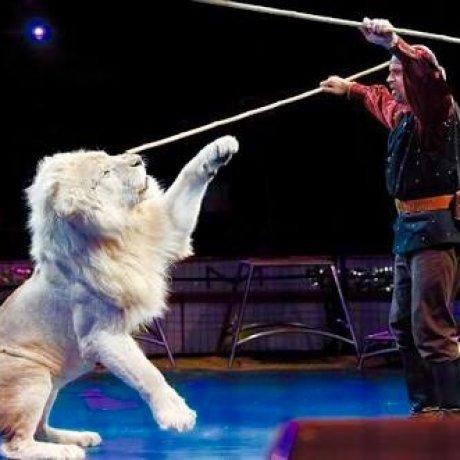 Kinoshita Circus Special Event