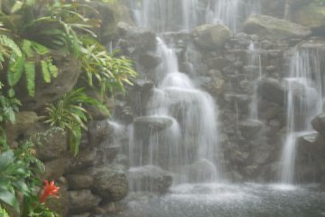 Waterfall inside the conservatory.  It was really humid as you can see!