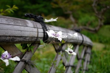 I liked the way these flowers were growing on the bamboo fence.