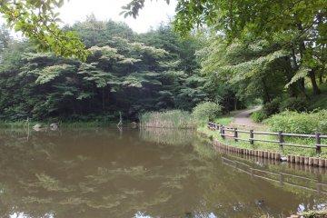 Berjalan Jelajahi Taman & Kanal di Yokohama