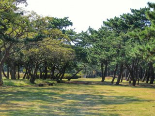 Futtsu Park is located on Futtsu Cape