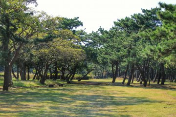 <p>Futtsu Park is located on Futtsu Cape</p>