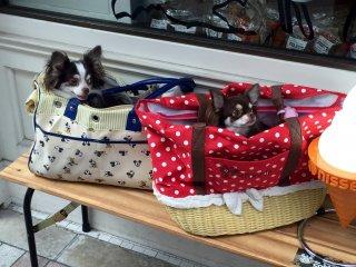 Одна из покупательниц оставила собачек на лавочке снаружи
