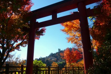 Magnificent Colors of Mt. Mitake