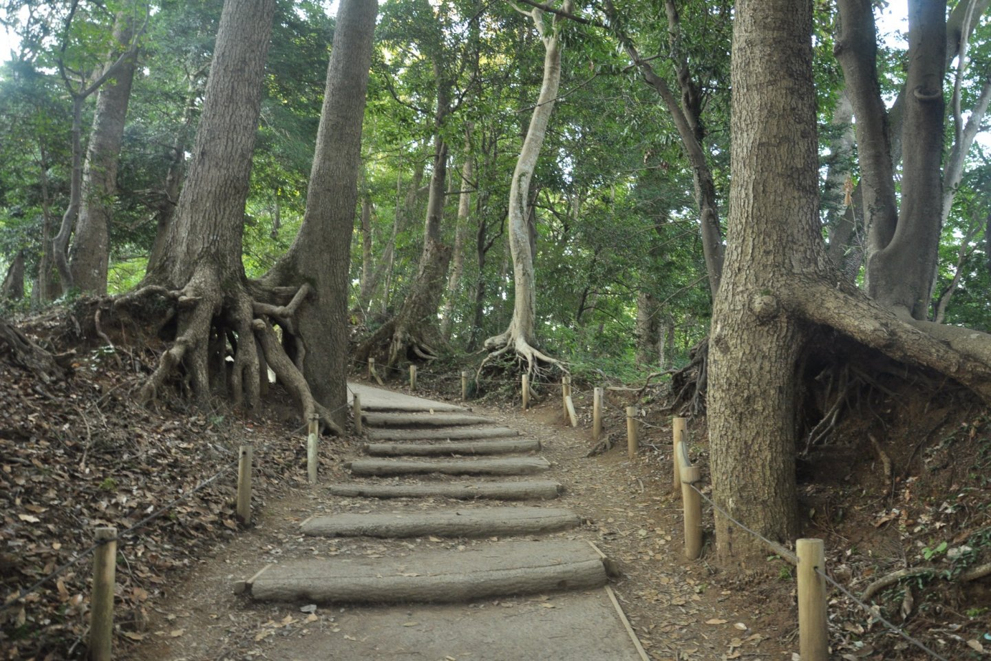 From Yakuoin to the top is only a short climb