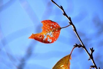 Caminando por el monte Asuwa al inicio del otoño
