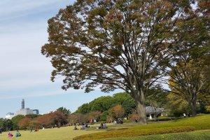 아름드리 나무 아래 드넓은 잔디밭에서 담소하는 사람들의 한가로운 모습.