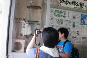 Nitama poses for visitors