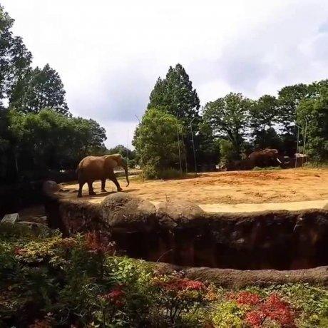 Exotic Sendai Yagiyama Zoological Park