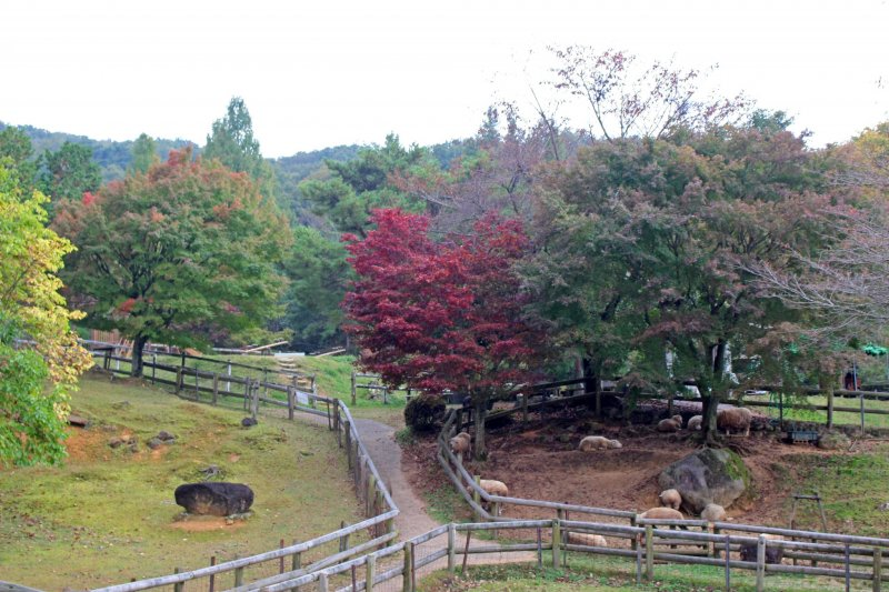 <p>Autumn foliage at the M&eacute;m&eacute; Makiba&#39;s sheep pen. The M&eacute;m&eacute; Makiba is a small farm that allows visitors to feed and pet the animals and see how wool is turned into yarn and finished goods</p>