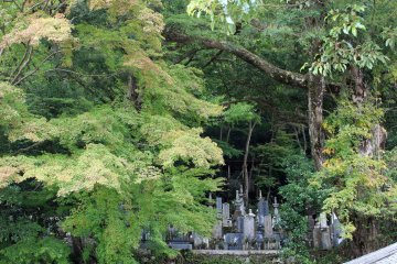 <p>These maples at Chokyuji Temple&#39;s graveyard tease the imagination with their autumn potential</p>