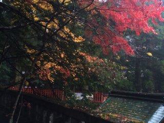 Daun yang berubah di Kuil Nikko