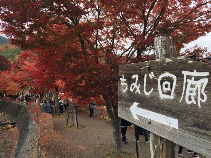 ทางเข้าสู่เส้นทางเมเปิ้ลที่ทะเลสาบคะวะงุชิ