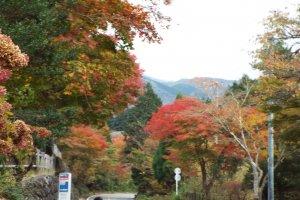 Fall colors atSengoku