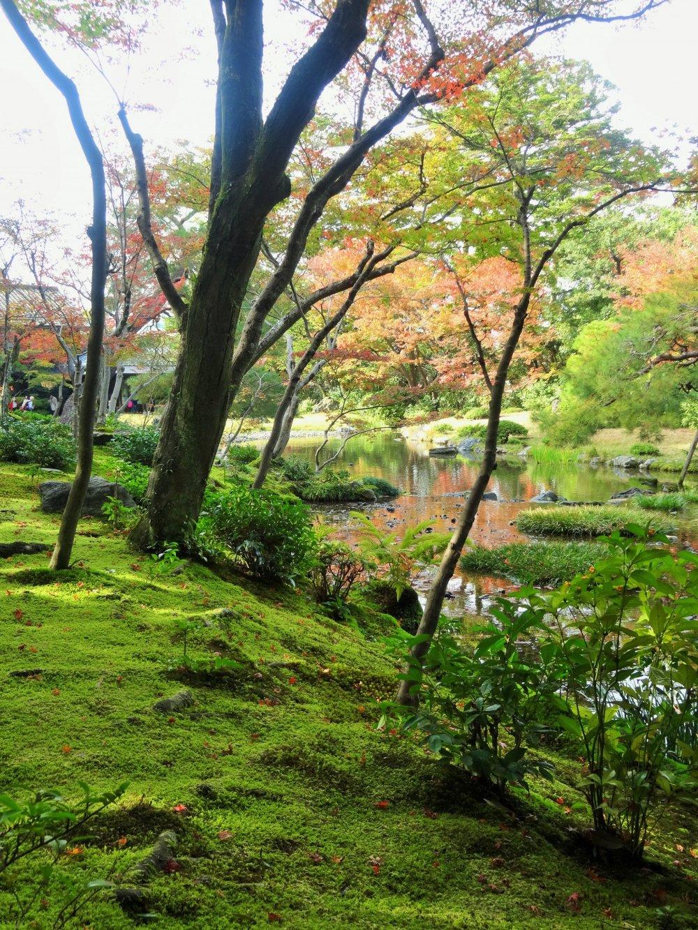 Le jardin murin an en automne kyoto japan travel - Le jardin d erables ...