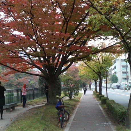 Rindu Kyoto