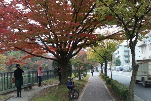 Suasana di salah satu sudut jalan di Kyoto ketika memasuki musim gugur