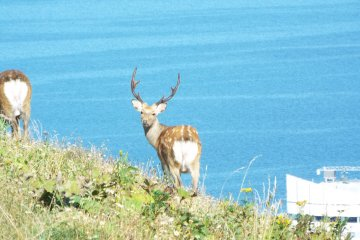 <p>Deer wandering around everywher</p>