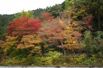 <p>A wall of autumnal fire.</p>