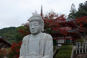 A red maple tree provides a beautiful backdrop for the seated Buddha.