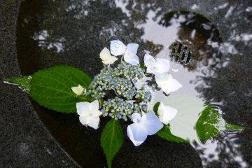 A hydrangea floating in a stone basin