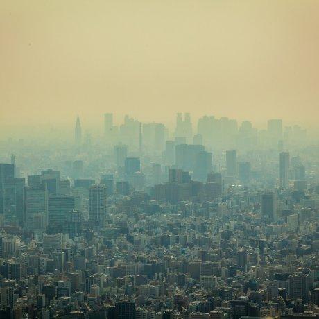 Skytree Views