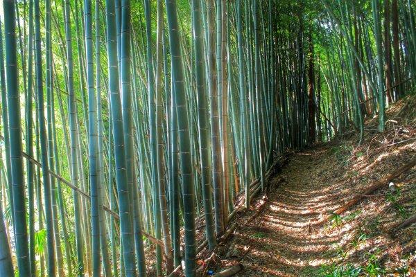 Солнечные лучи, падающие на тропу сквозь бамбуковую рощу