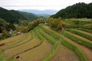 Terraced rice paddies on the road to the shrine