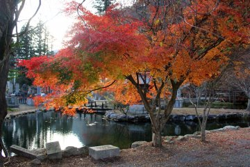 <p>The maple tree that made me stop my scooter for a photo and launched my adventure at Ryusenji Temple</p>