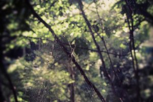 Spider webs decorate the forest.