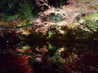I couldn't get over how beautiful this pond/pool was with the illumination. It almost looked too perfect