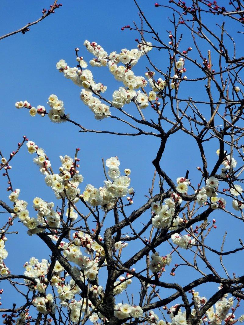 하얀 꽃은 파란 하늘과 대조를 이룬다