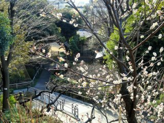 Beyond the plum grove lies a small traditional garden with several tea houses