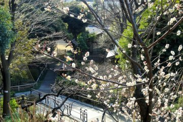 자두나무 숲 너머에는 찻집이 여러 채 있는 작은 전통 정원이 있다