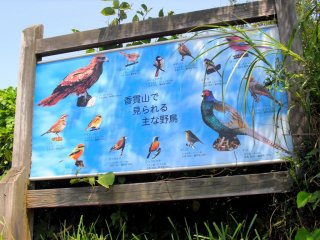 Meet all these birds in person here in Mt. Kanuki. Don't forget to get their autographs!