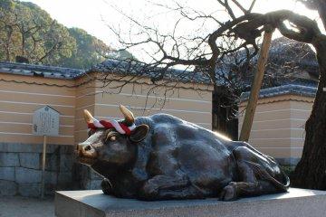 소의 머리를 문지름으로써, 여러분에게 시험을 위한 지혜와 행운을 가져다 줄 것이라고 믿는다.