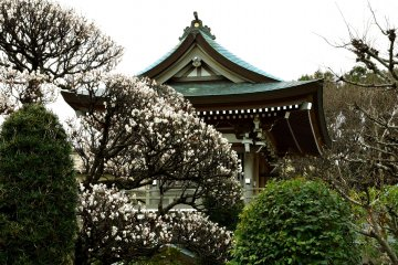 The fragrance of the plum blossoms is beautiful