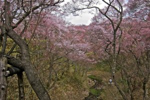 Sakura and the moat from the Ou-Un-Kyo