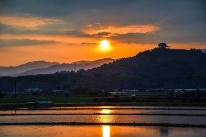 Sunset over the rice fields