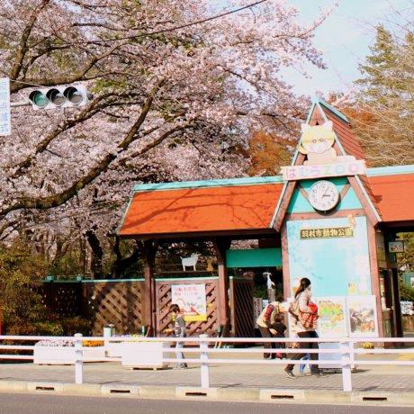 Sở thú Hamura chào mừng những chú chim mới