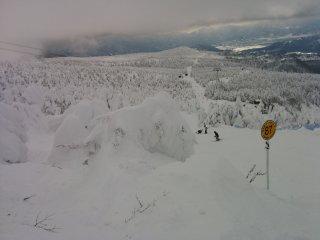 Куда ни погляди, сплошь укрытые снегом деревья!