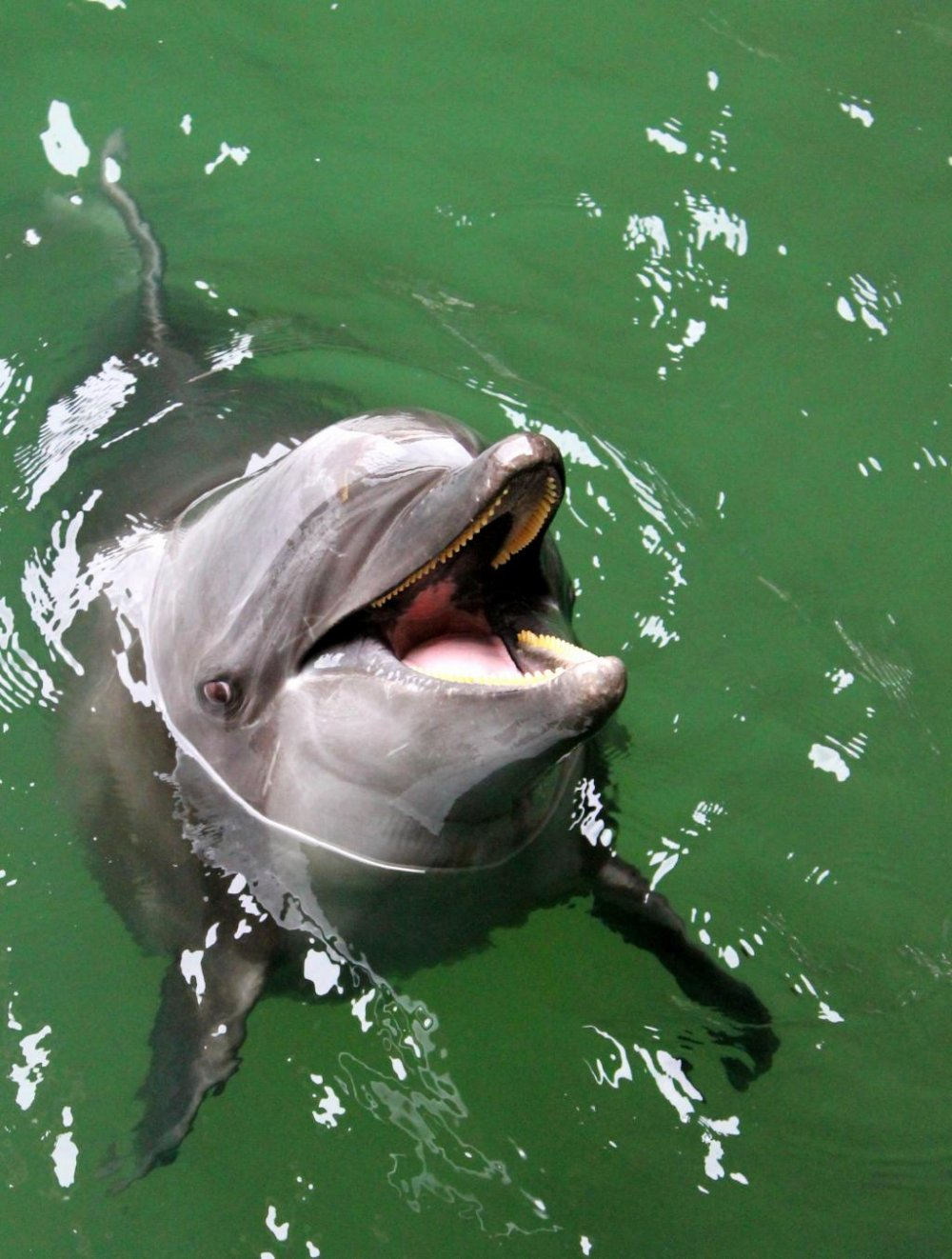"""""""Look at Me! Look at Me!"""" said Flipper's long lost cousin."""