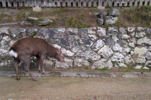 "Katakan ""halo"" untuk penduduk favorit di Nara!"