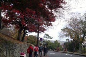 Pohon-pohon dengan dedaunan merah menghias jalan-jalan di Nara saat musim gugur