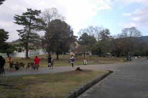 Para pengunjung taman sedang asyik bermain dengan sekumpulan rusa