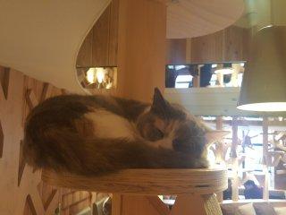 고양이들을 위한 라운지와 책장