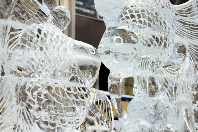 These fish very nearly kiss in an ice sculpture