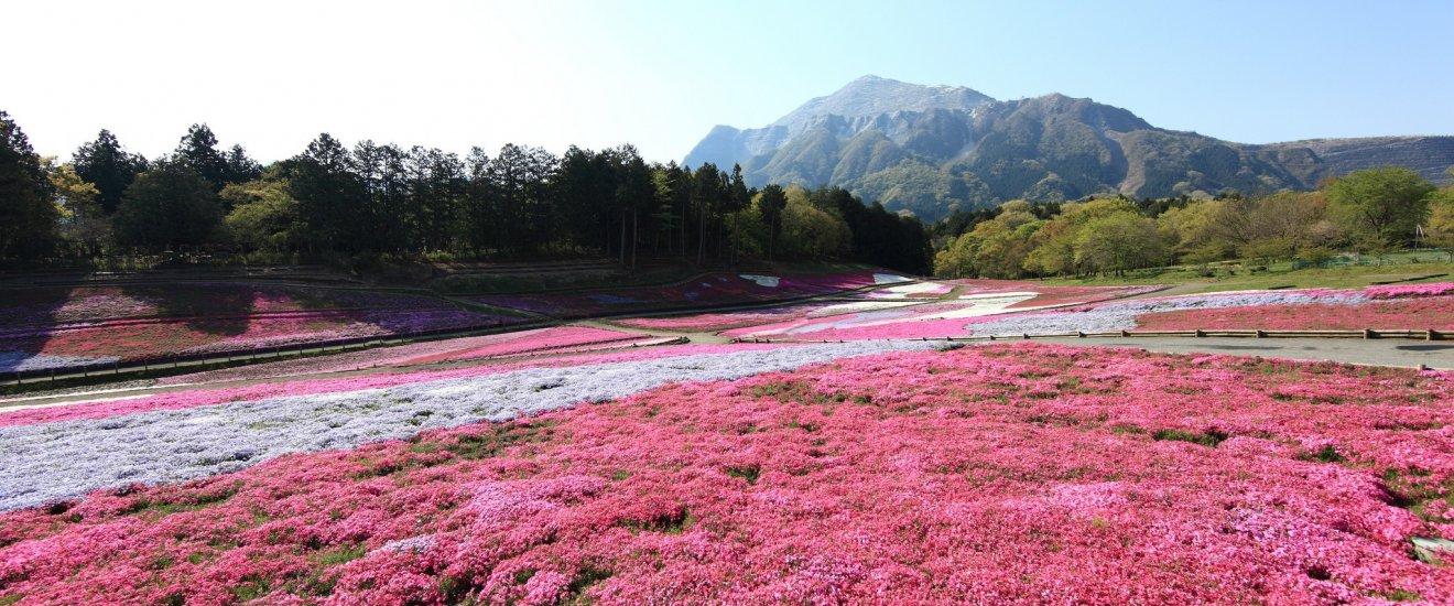 Saitama Prefecture - Saitama - Japan Travel - Japan ...