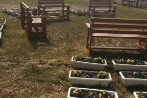 Berderet pot-pot bunga dan bangku untuk mengenang mereka yang kehilangan nyawanya akibat tsunami pada tahun 2011